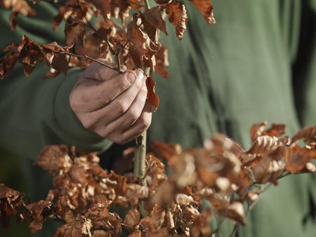 replenishing: Man Holding Young Tree