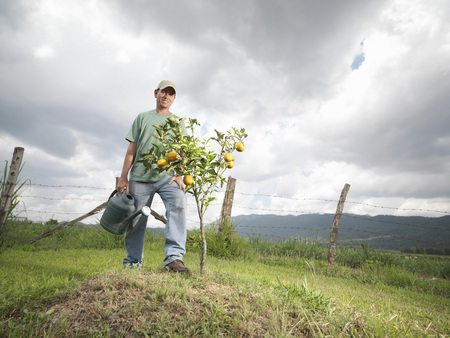 refreshed: Man Watering A Young Orange Tree
