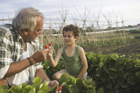 selections: Grandfather and grandson with strawberry LANG_EVOIMAGES
