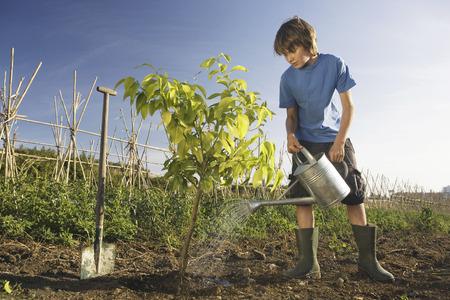 preadolescent: Pre-adolescent boy planting tree LANG_EVOIMAGES