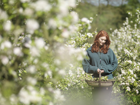 Woman Carrying Apple Blossom In Orchard