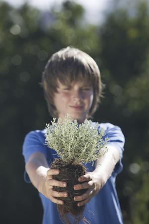 preadolescent: Pre-adolescent boy holding small plant