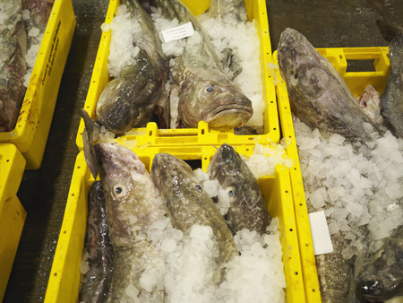 omnivore: Fish And Ice In Yellow Containers