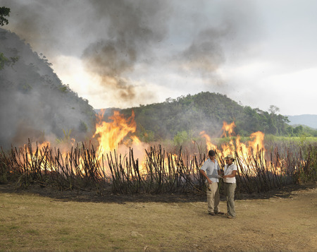 blazes: Workers In Front Of Burning Sugar Cane