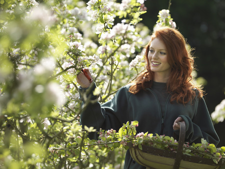 Woman Cutting Apple Blossom In Orchard