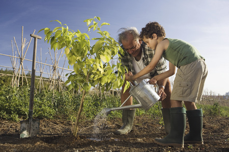 the elderly tutor: Grandfather and grandson planting tree LANG_EVOIMAGES