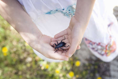appendage: A young girl holding a beetle