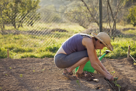 seeding: gardening on organic farm in Spain