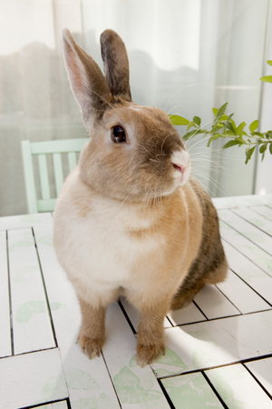 furs: Rabbit sitting on a table