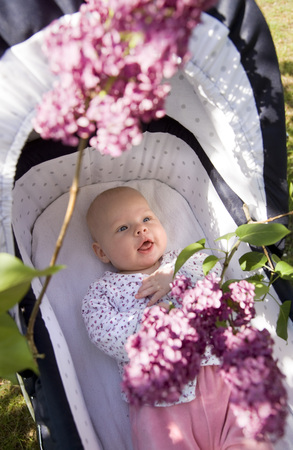 baby in pram with lilac blossom LANG_EVOIMAGES