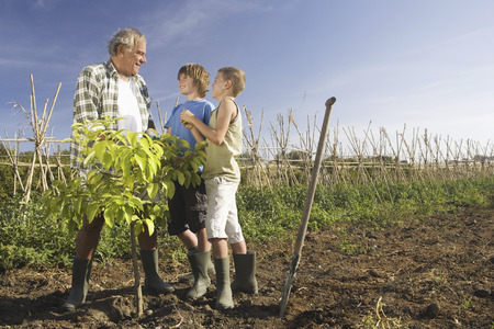 the elderly tutor: Grandfather and grandsons planting tree