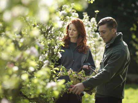 assembled: Couple Cutting Apple Blossom In Orchard