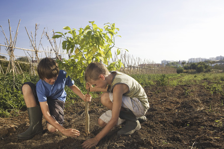 planted: Two brothers planting tree LANG_EVOIMAGES