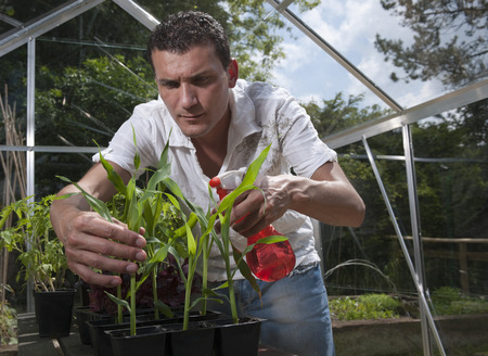conservatories: Man in greenhouse spraying plants LANG_EVOIMAGES