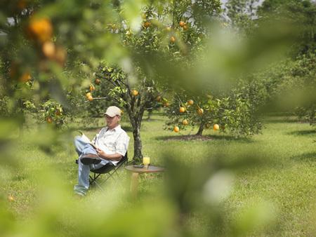 Man With Juice Reading In Orange Grove