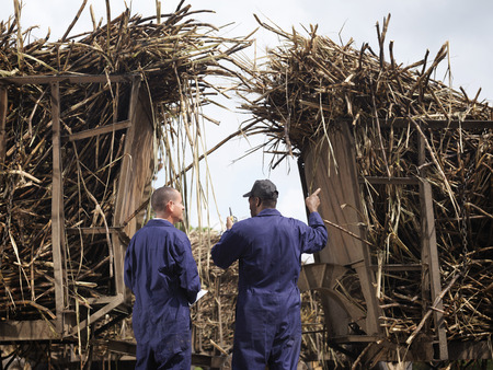 truckload: Workers Discussing Sugar Cane