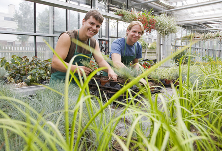 conservatories: two men caring for plants