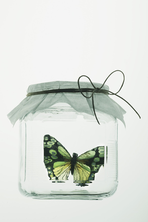 captives: Butterfly in glass jar with paper cover LANG_EVOIMAGES
