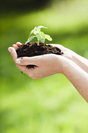 appendage: woman holding sapling in heap of earth