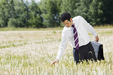businessman in cornfield