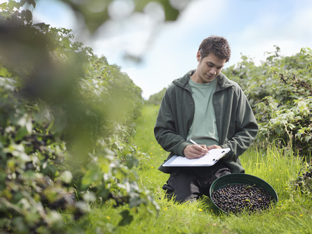 advances: Man Inspecting Harvested Blackcurrants LANG_EVOIMAGES
