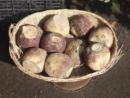 Basket Of Harvested Swedes