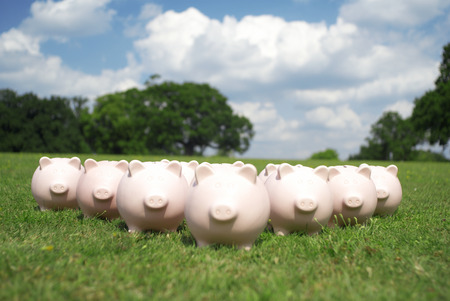 conforms: pigs in a field