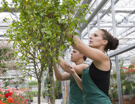 conservatories: woman and man caring for tree