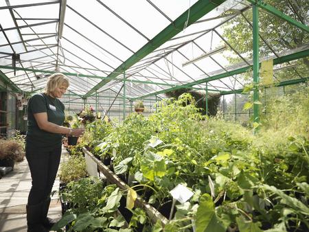 conservatories: Female Garden Center Worker With Plants