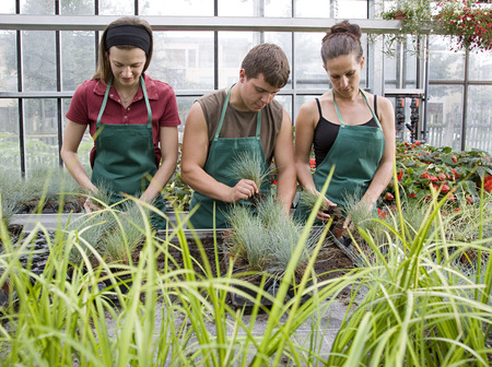 conservatories: two women, man caring for plants