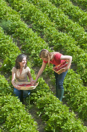 shared sharing: women in field with strawberry baskets