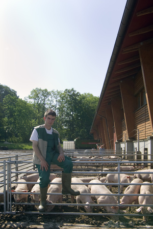 leaning by barrier: Farmer in front of his pigs