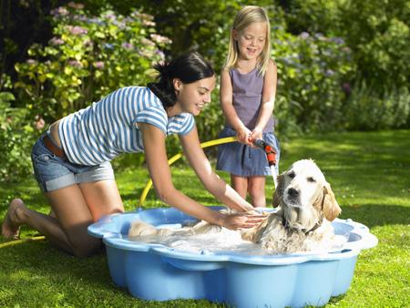 agachado: Madre, hija, lavado, perro
