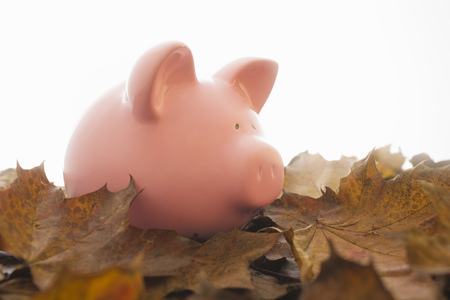 conserving: Piggy bank on leaves