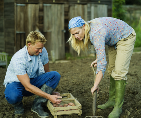 assembled: A couple working in a vegetable garden