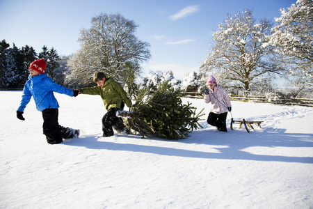 customs and celebrations: Children pulling Christmas tree in snow LANG_EVOIMAGES