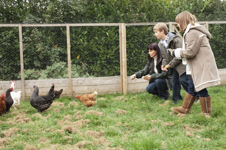 egglayer: Mother and children feeding chickens