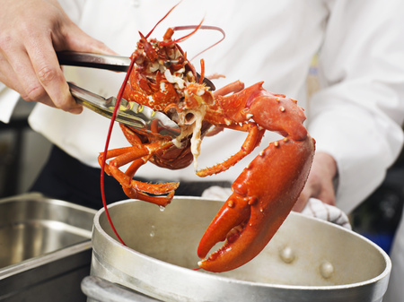 A Lobster being lifted out of the pot