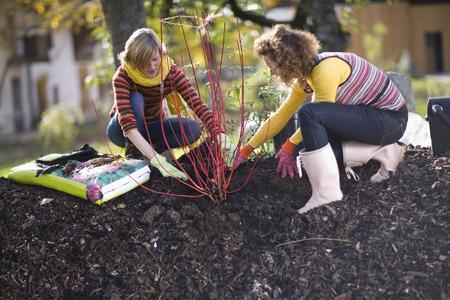 two people fertility: autumnal gardening