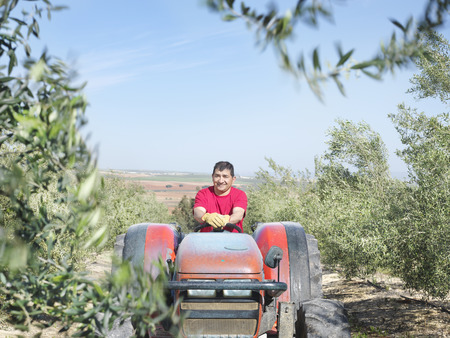 Man on tractor in olive grove LANG_EVOIMAGES