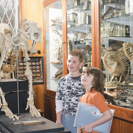 exposition: 2 boys looking at tiger skeleton
