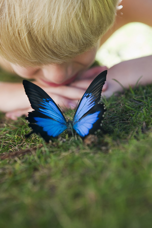Boy looking at a  Butterfly