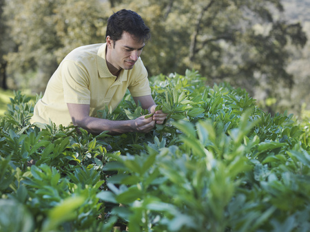 Man inspecting plant leaves