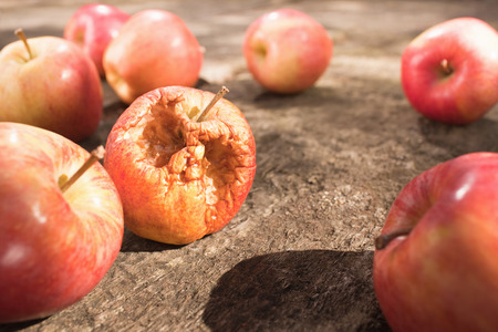 putrefied: Rotten Apple