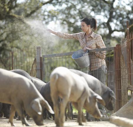 Woman on farm feeding pigs