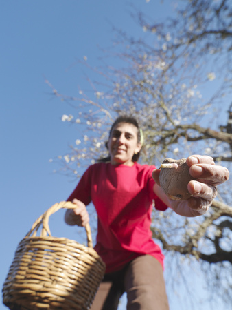 seeding: Woman sowing potatoes