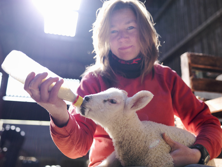 fed up: Woman feeding lamb with bottle