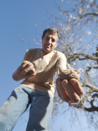 seeding: Man sowing potatoes