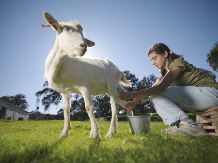 summers: Teenagers milking a white goat