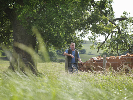 leaning by barrier: Farmer with Guernsey calves LANG_EVOIMAGES